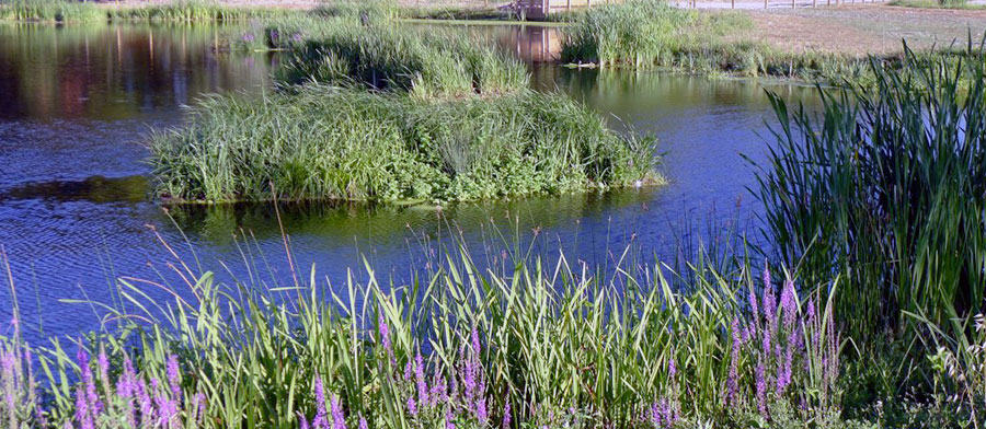 Bassins d'infiltration des eaux pluviales, retenues collinaires